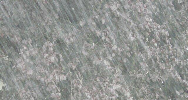 26 мая Украину зальет дождями — Укргидрометцентр