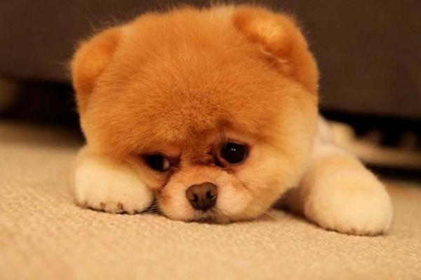 Меня зовут Боня! «Счастливый Животик» составил рейтинг самых популярных кличек собак в Москве