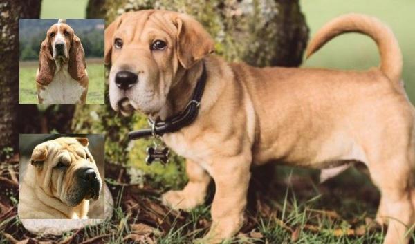 16 гибридных пород собак, о которых вы вряд ли слышали